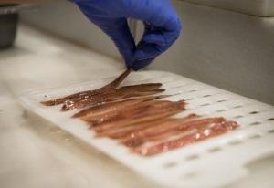 La anchoa de Santoña: tu aliado perfecto para llevar una dieta equilibrada