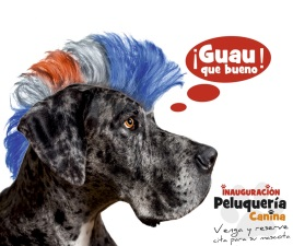 Monta un centro de belleza canino con Tierra Animal